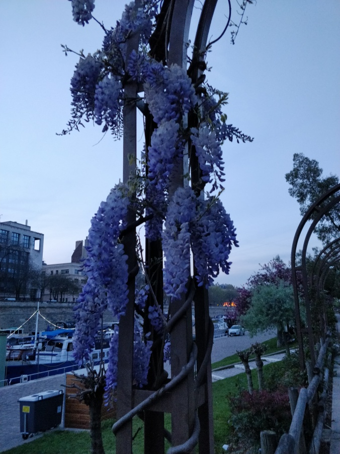 Wisteria people